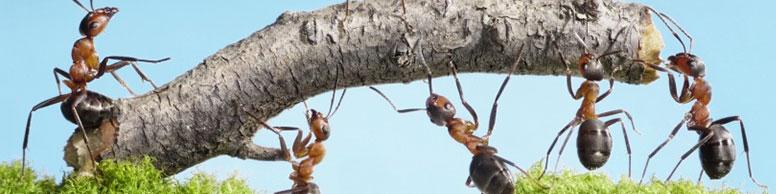 samenwerken of samen werken