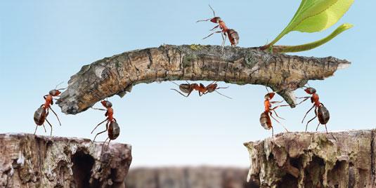 Webinar – Samenwerken of samen werken. <br>Wat kiest u?